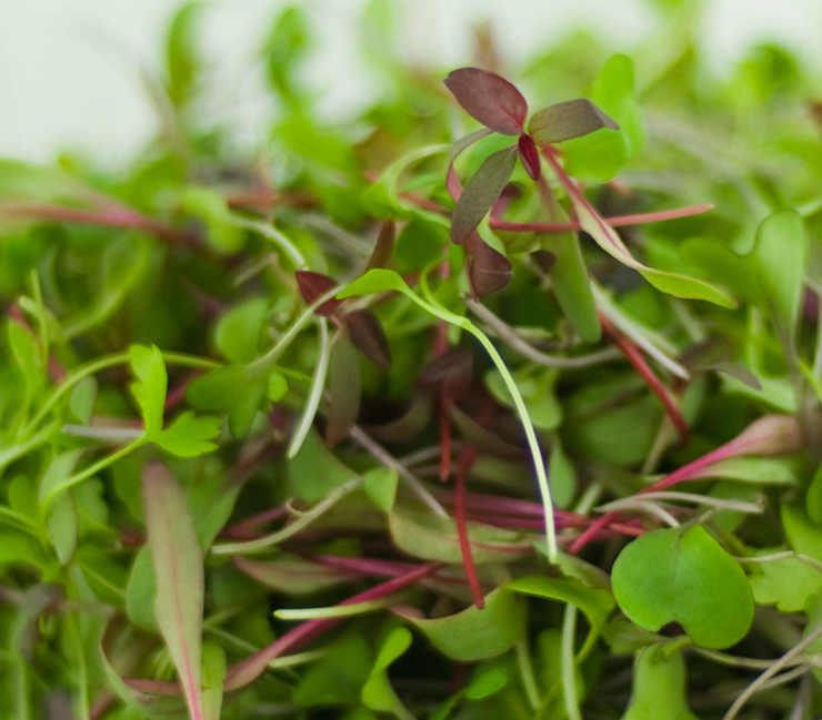 Microgreens Mix close up